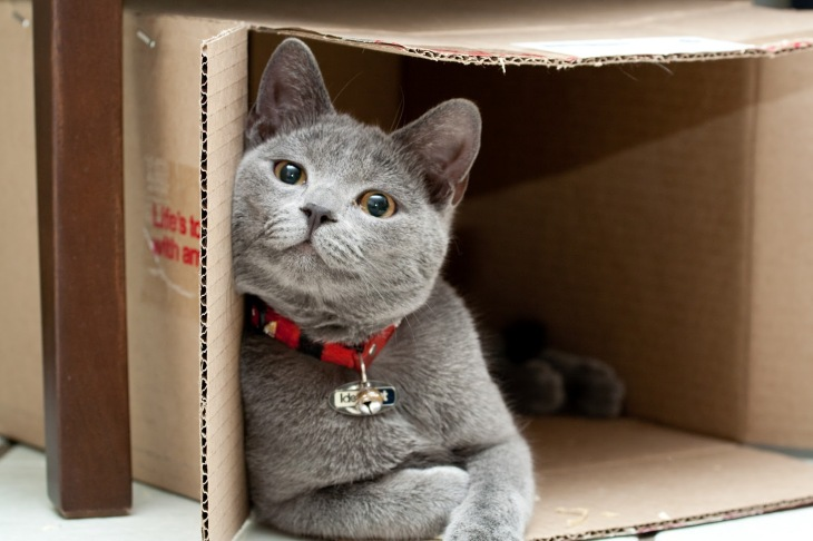 cat-in-box-large
